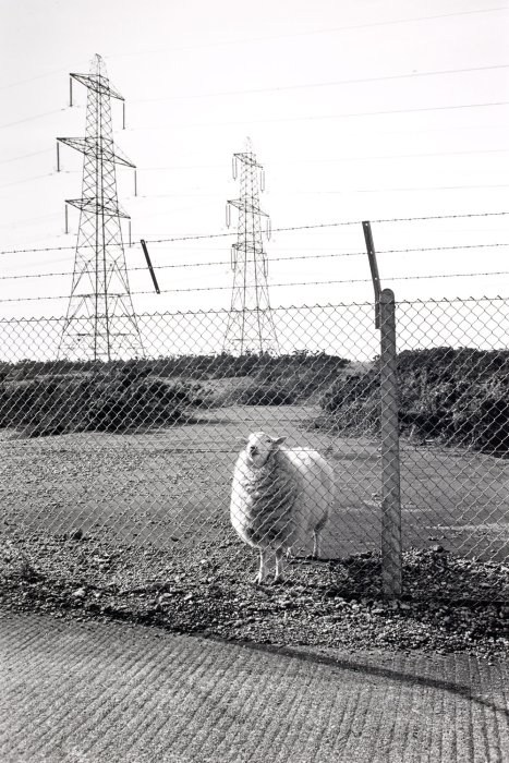 Blocked Public Footpath in MOD Land, Lydd, 1988. © Fay Godwin