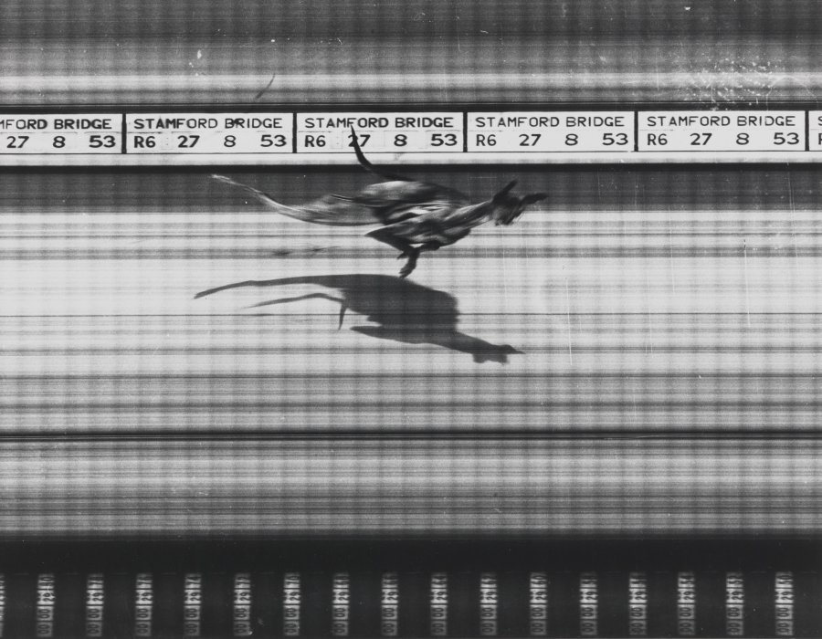 Photo Finish, Stamford Bridge Greyhound Track, 1953