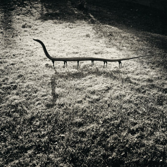 Solenoglypha Polipodida—Position of Attack, 1987, from Fauna © Joan Fontcuberta and Pere Formiguera