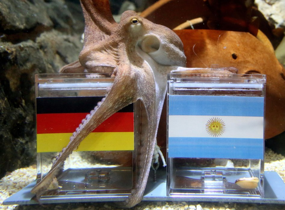 Paul the octopus tips Germany to win the World Cup, Moenchengladbach, Germany, July 2014
