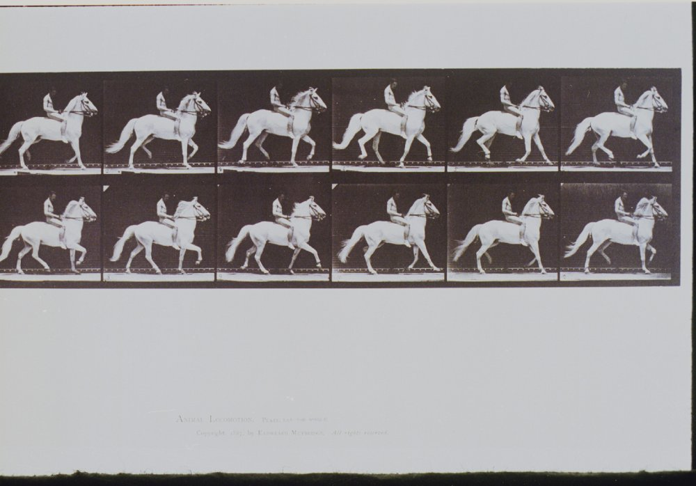 The Horse in Motion, 1878, Eadweard Muybridge, Science Museum Group collection